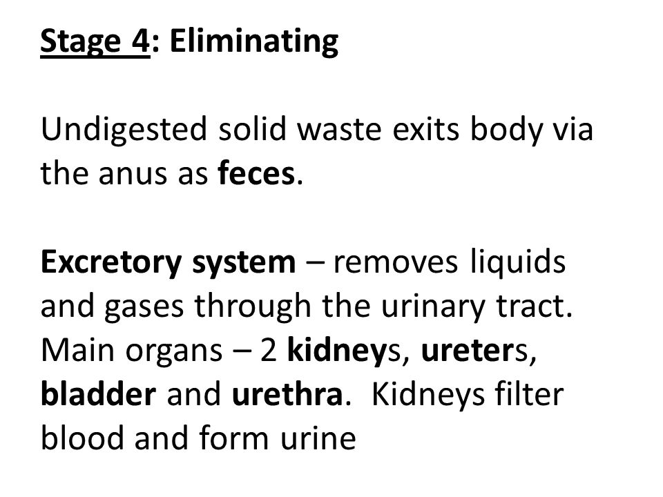 Stage 4: Eliminating Undigested solid waste exits body via the anus as feces. Excretory system – removes liquids and gases through the urinary tract.