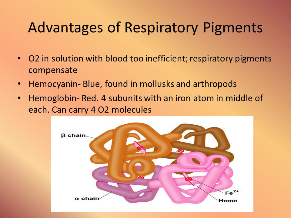 Advantages of Respiratory Pigments O2 in solution with blood too inefficient; respiratory pigments compensate Hemocyanin- Blue, found in mollusks and