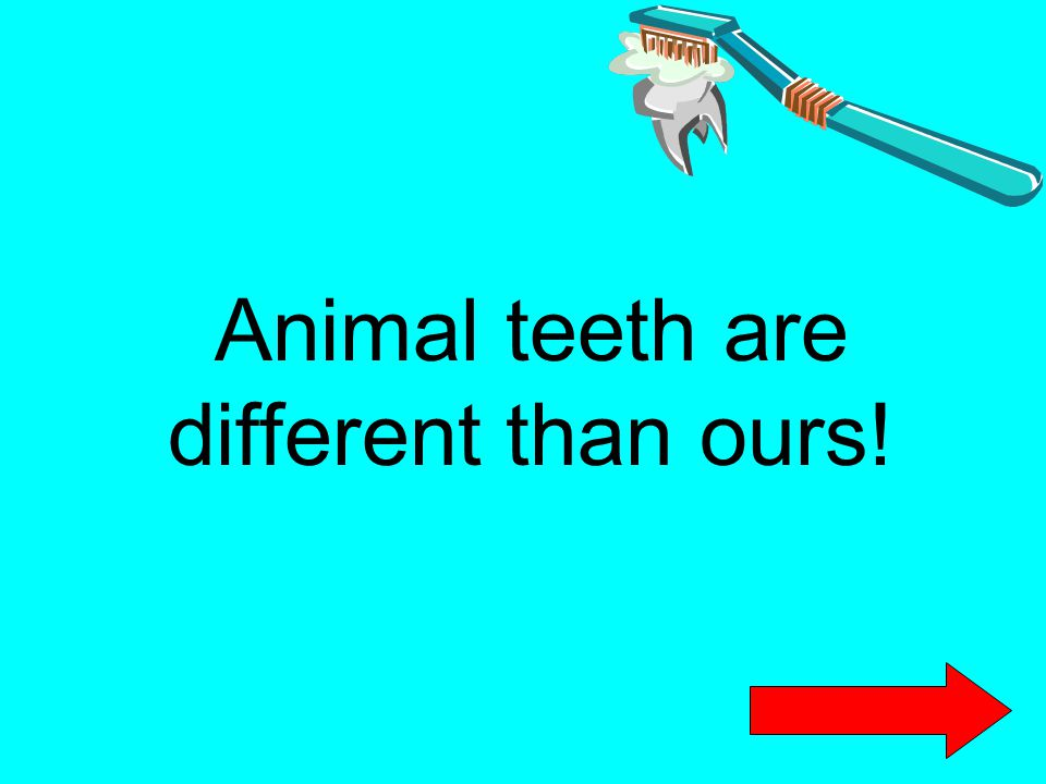 Animal teeth are different than ours!