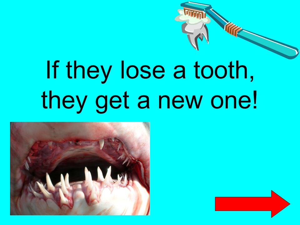 If they lose a tooth, they get a new one!