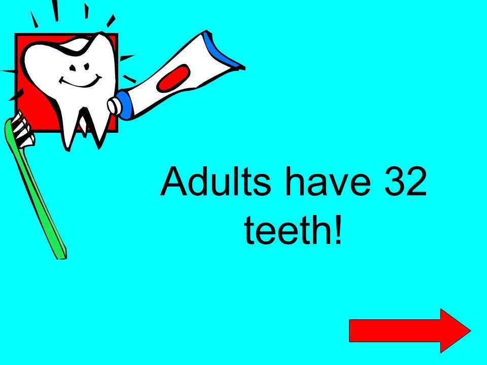 Adults have 32 teeth!
