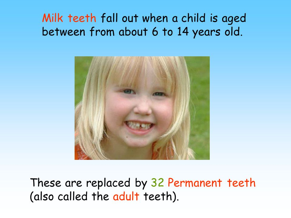 Milk teeth fall out when a child is aged between from about 6 to 14 years old. These are replaced by 32 Permanent teeth (also called the adult teeth).