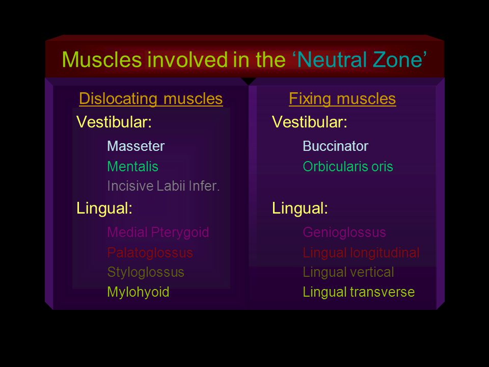 Muscles involved in the Neutral Zone Dislocating muscles Vestibular: Masseter Mentalis Incisive Labii Infer. Lingual: Medial Pterygoid Palatoglossus S