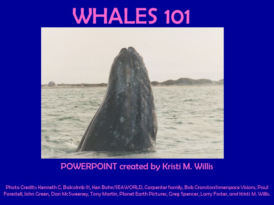 WHALES 101 POWERPOINT created by Kristi M. Willis Photo Credits: Kenneth C.