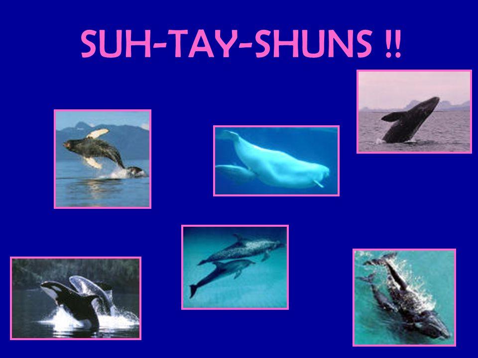 SUH-TAY-SHUNS !!