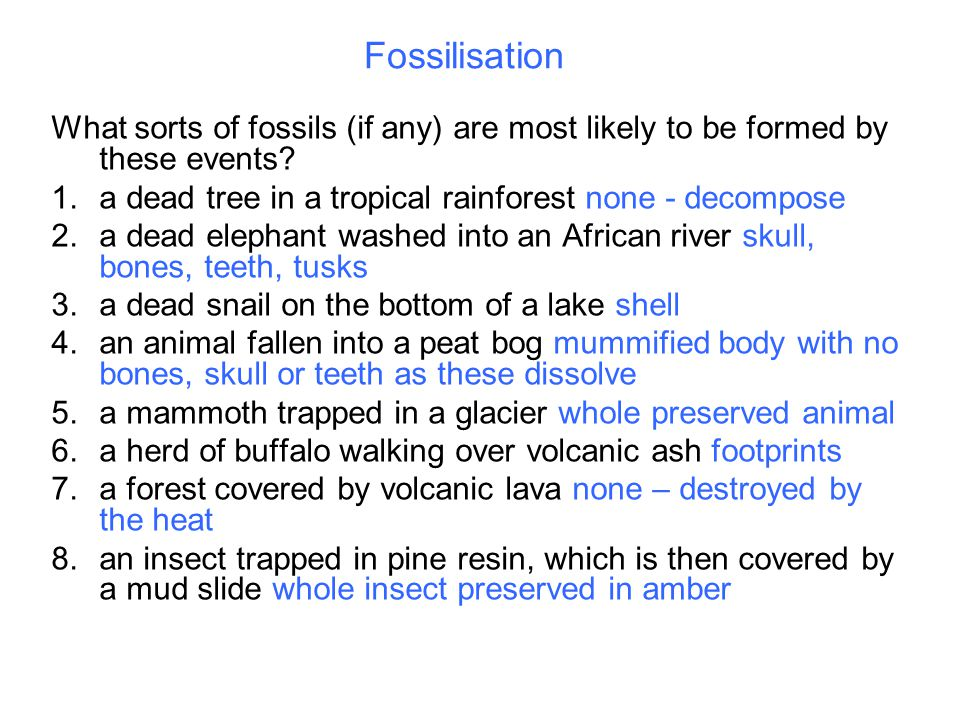 Fossilisation What sorts of fossils (if any) are most likely to be formed by these events.
