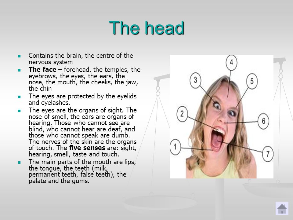 The head Contains the brain, the centre of the nervous system The face – forehead, the temples, the eyebrows, the eyes, the ears, the nose, the mouth, the cheeks, the jaw, the chin The eyes are protected by the eyelids and eyelashes.