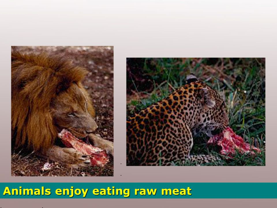 Thousands of years passed… and meat became a basic staple food… Nowadays the meat industry is a colossal business.