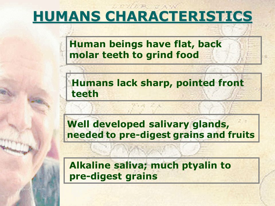 HUMANS CHARACTERISTICS Human beings have flat, back molar teeth to grind food Well developed salivary glands, needed to pre-digest grains and fruits Alkaline saliva; much ptyalin to pre-digest grains Humans lack sharp, pointed front teeth