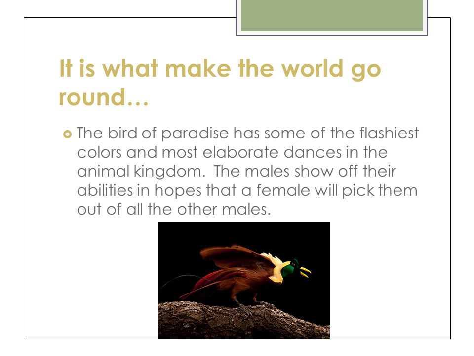It is what make the world go round… The bird of paradise has some of the flashiest colors and most elaborate dances in the animal kingdom.