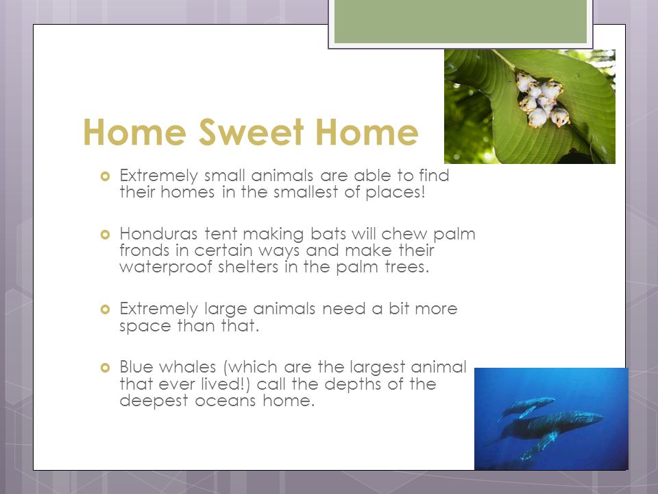 Home Sweet Home Extremely small animals are able to find their homes in the smallest of places.