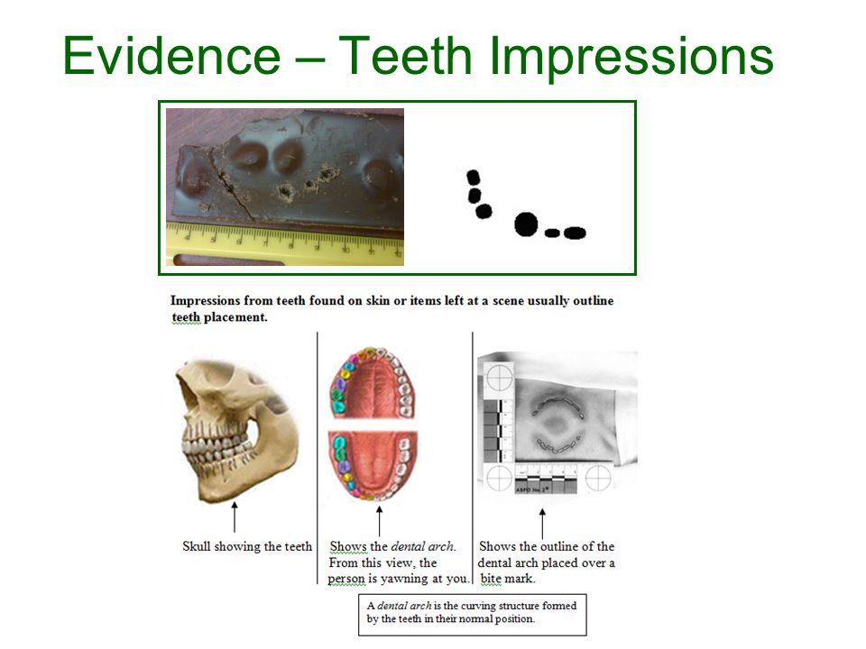Evidence – Teeth Impressions