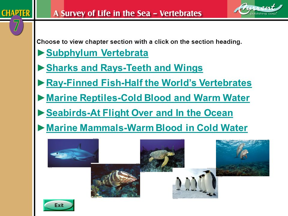 MenuPreviousNext 7 - 2 Subphylum Vertebrata Chapter 7 Pages 7-2 to 7-4