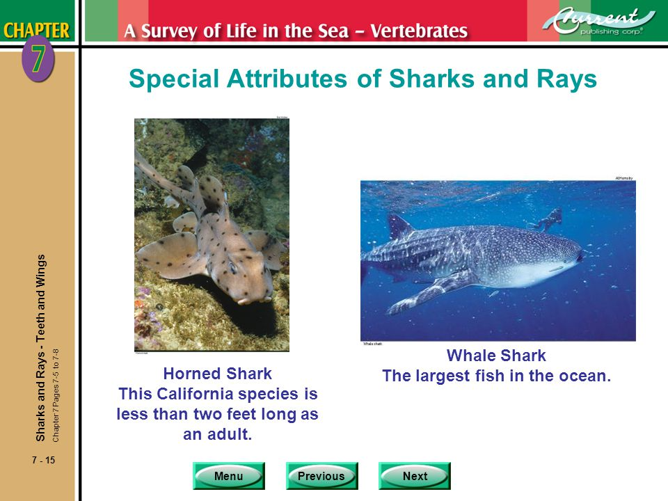 MenuPreviousNext 7 - 15 Special Attributes of Sharks and Rays Horned Shark This California species is less than two feet long as an adult. Whale Shark