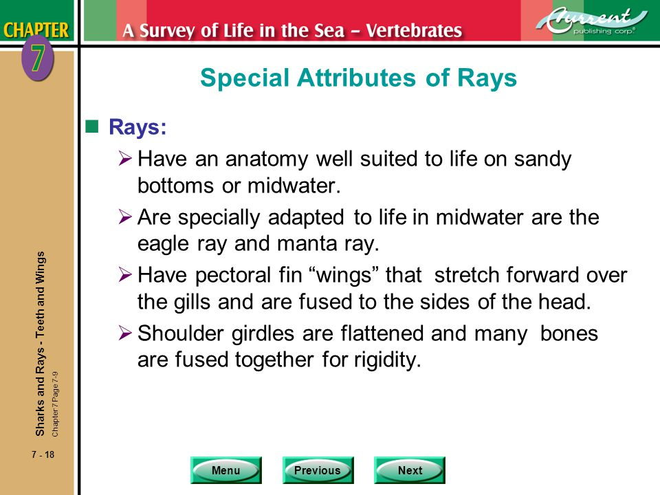 MenuPreviousNext 7 - 18 Special Attributes of Rays nRays: Have an anatomy well suited to life on sandy bottoms or midwater. Are specially adapted to l