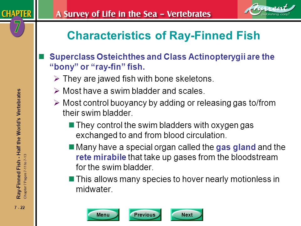 MenuPreviousNext 7 - 22 Characteristics of Ray-Finned Fish nSuperclass Osteichthes and Class Actinopterygii are the bony or ray-fin fish. They are jaw