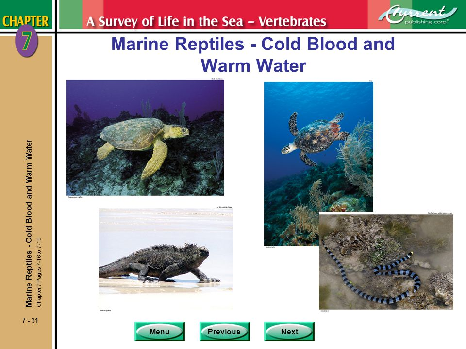 MenuPreviousNext 7 - 31 Marine Reptiles - Cold Blood and Warm Water Chapter 7 Pages 7-16 to 7-19