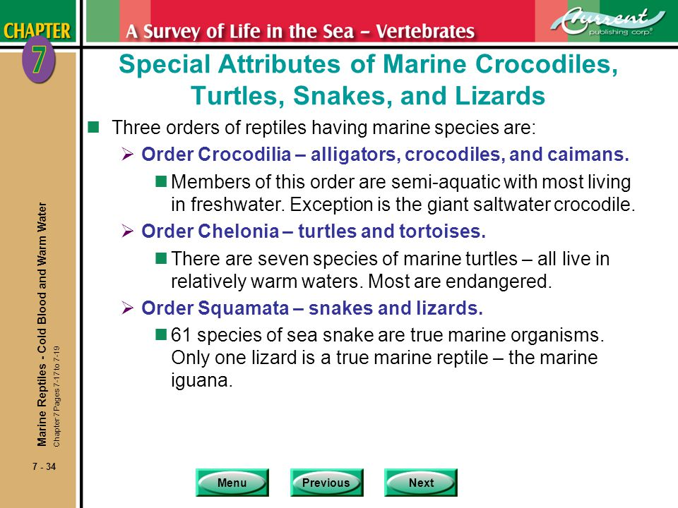 MenuPreviousNext 7 - 34 Special Attributes of Marine Crocodiles, Turtles, Snakes, and Lizards nThree orders of reptiles having marine species are: Ord