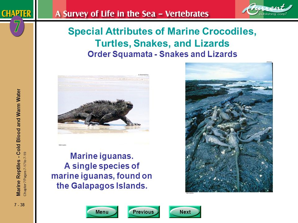 MenuPreviousNext 7 - 38 Special Attributes of Marine Crocodiles, Turtles, Snakes, and Lizards Order Squamata - Snakes and Lizards Marine iguanas. A si