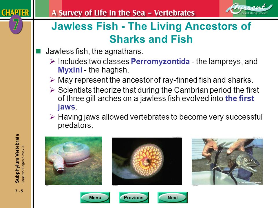 MenuPreviousNext 7 - 6 Sharks and Rays - Teeth and Wings Chapter 7 Pages 7-4 to 7-10