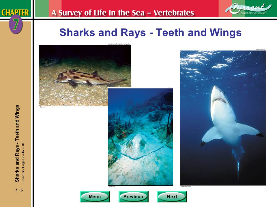 MenuPreviousNext 7 - 17 Special Attributes of Rays nSuperorder Batidoidimorpha of subclass Elasmobranchii consists of the rays, which includes skates, mantas and guitarfish.