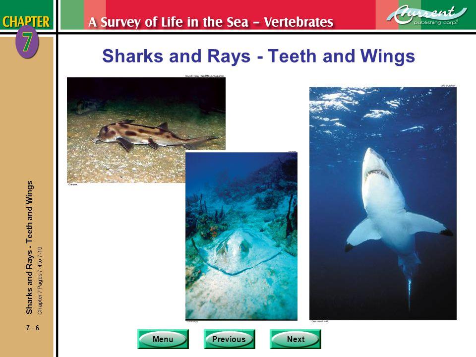 MenuPreviousNext 7 - 47 Characteristics of Marine Mammals nAll organisms in class Mammalia share these characteristics.