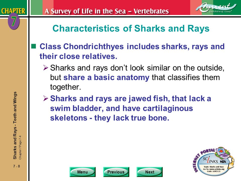 MenuPreviousNext 7 - 9 Special Attributes of Sharks and Rays nSharks and rays: Are in the subclass Elasmobranchii.