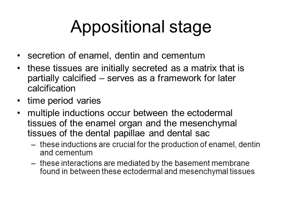 Appositional stage secretion of enamel, dentin and cementum these tissues are initially secreted as a matrix that is partially calcified – serves as a