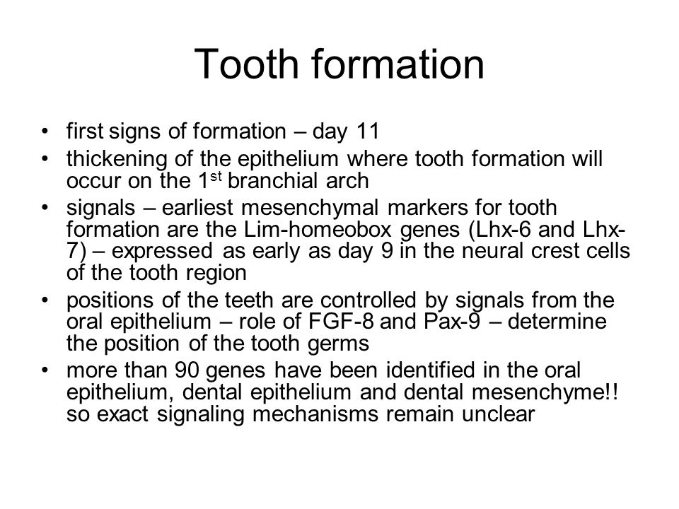 Tooth formation: Initial stages The initiation of tooth formation starts around the 37th day of gestation.