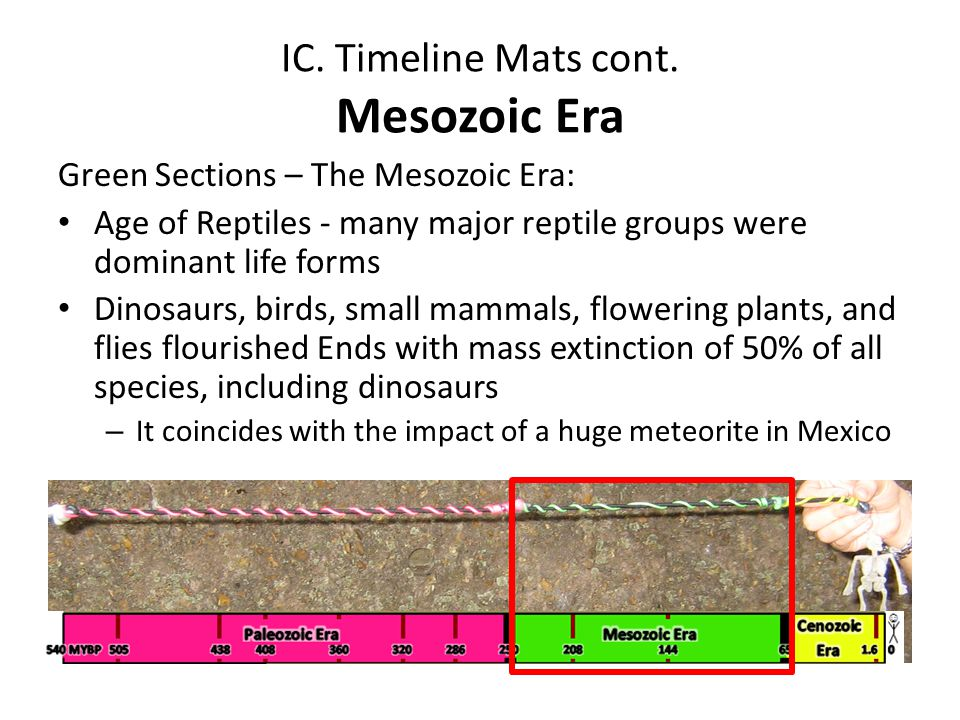 IC. Timeline Mats cont. Mesozoic Era Green Sections – The Mesozoic Era: Age of Reptiles - many major reptile groups were dominant life forms Dinosaurs