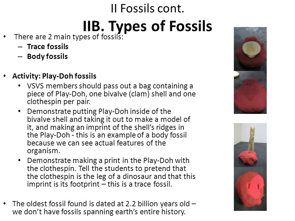 II Fossils cont. IIB. Types of Fossils There are 2 main types of fossils: – Trace fossils – Body fossils Activity: Play-Doh fossils VSVS members shoul