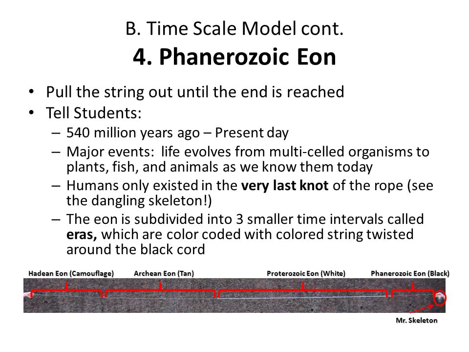 B. Time Scale Model cont. 4. Phanerozoic Eon Pull the string out until the end is reached Tell Students: – 540 million years ago – Present day – Major