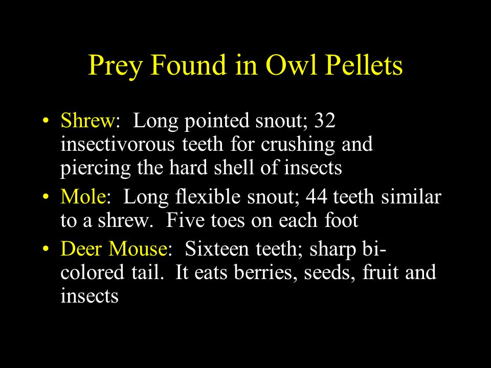 Prey Found in Owl Pellets House Mouse: Grayish brown fur, sixteen teeth, but the incisors are smooth.