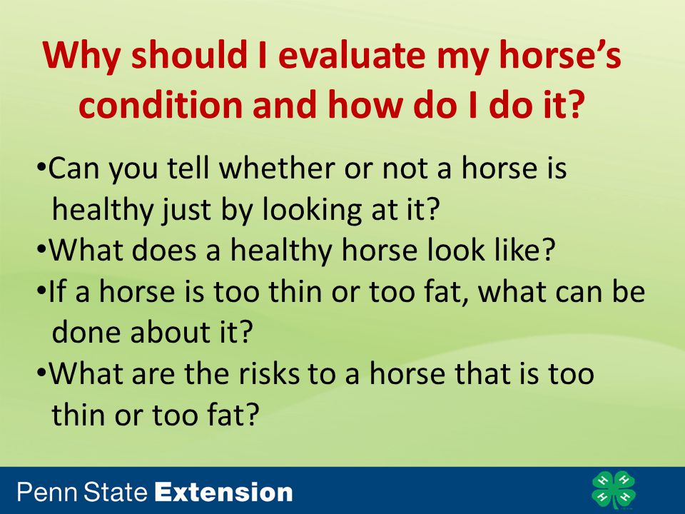 Why should I evaluate my horses condition and how do I do it.