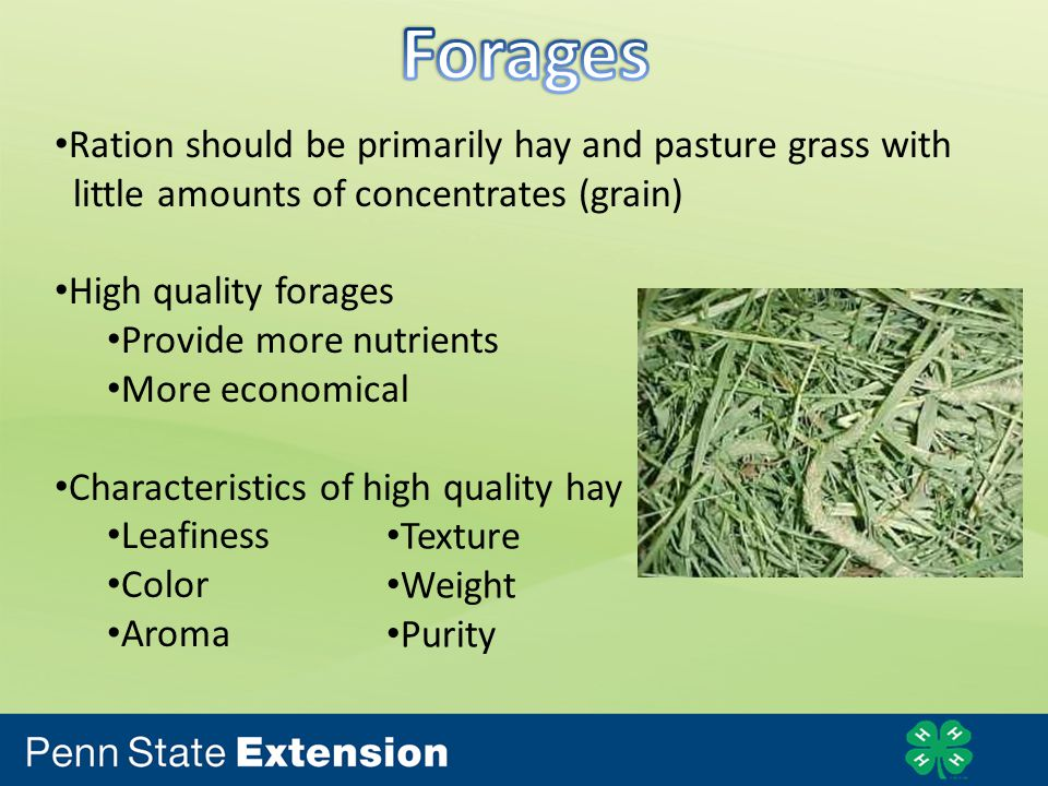 Ration should be primarily hay and pasture grass with little amounts of concentrates (grain) High quality forages Provide more nutrients More economical Characteristics of high quality hay Leafiness Color Aroma Texture Weight Purity