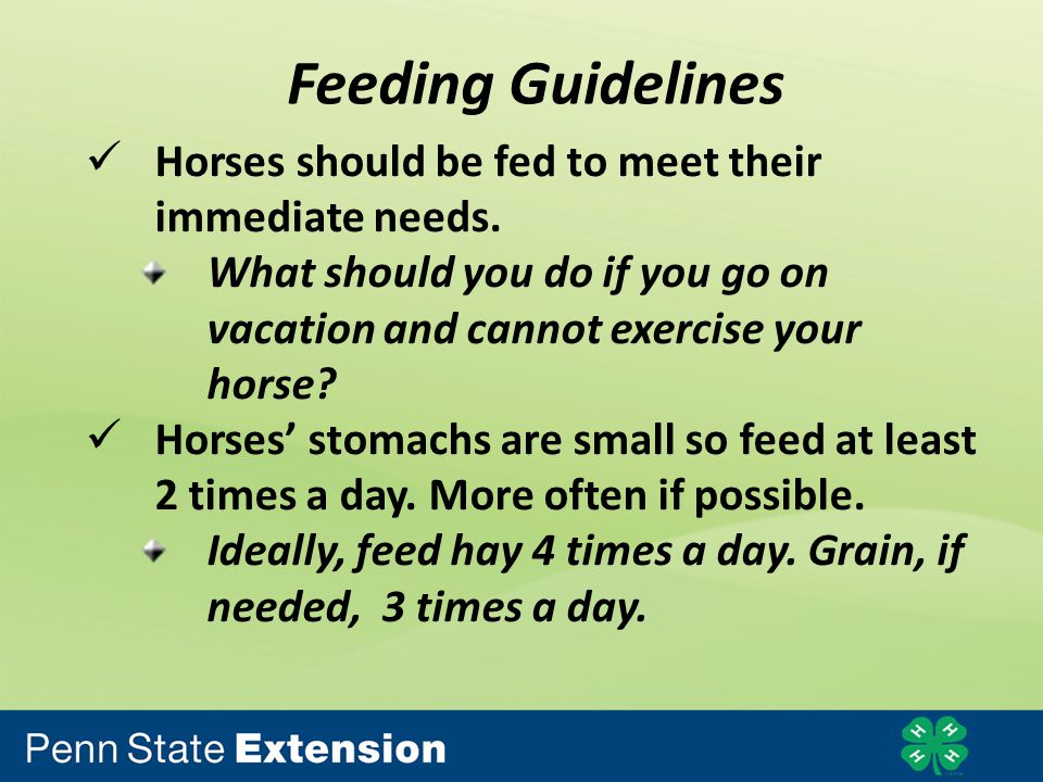 Feeding Guidelines Horses should be fed to meet their immediate needs.