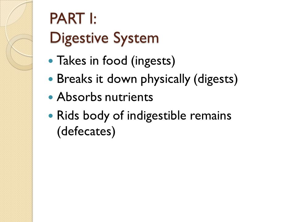 PART I: Digestive System Takes in food (ingests) Breaks it down physically (digests) Absorbs nutrients Rids body of indigestible remains (defecates)
