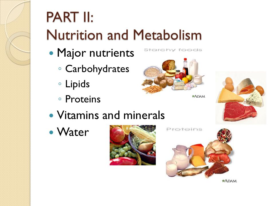 PART II: Nutrition and Metabolism Major nutrients Carbohydrates Lipids Proteins Vitamins and minerals Water