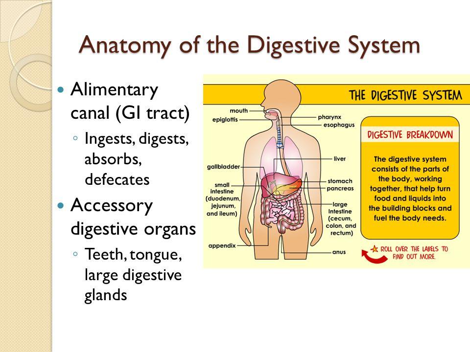 Large Intestine 5 ft Cecum Appendix Colon Ascending colon Transverse colon Descending colon Sigmoid colon Rectum Anal canal