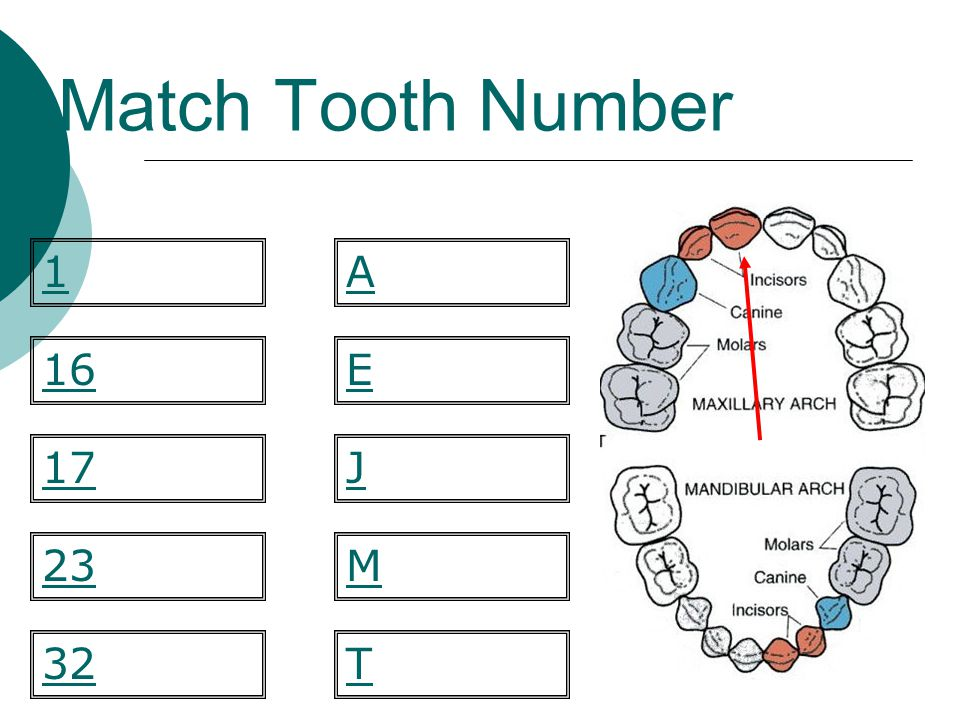 Match Tooth Number M E 23 1 16 32 17J T A