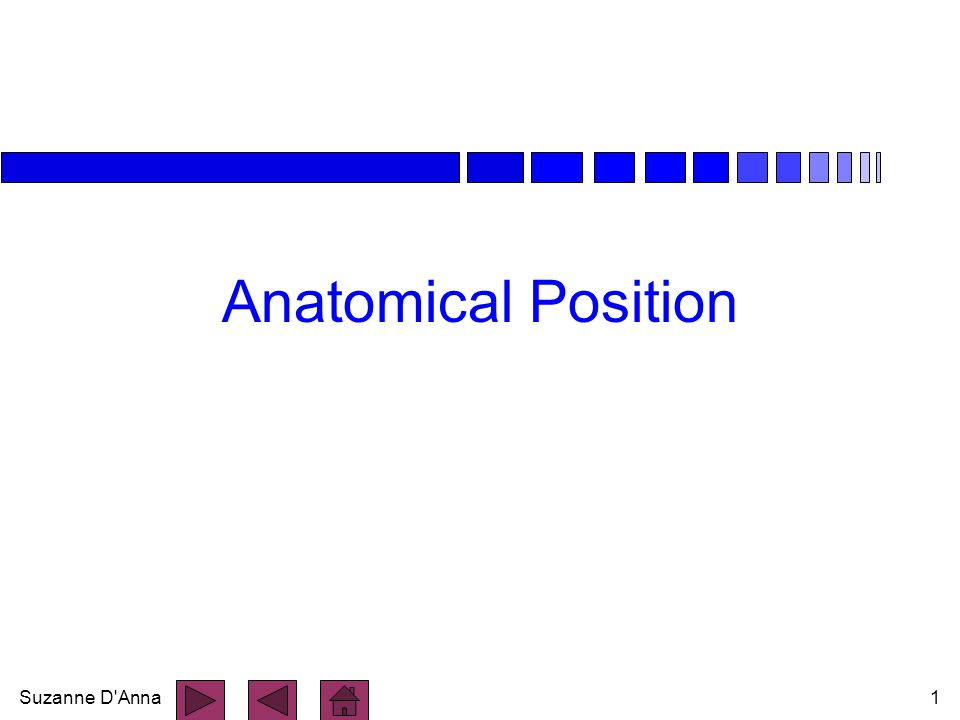 Suzanne D Anna2 Anatomical Position n body erect n feet together n arms hanging at sides n palms facing forward