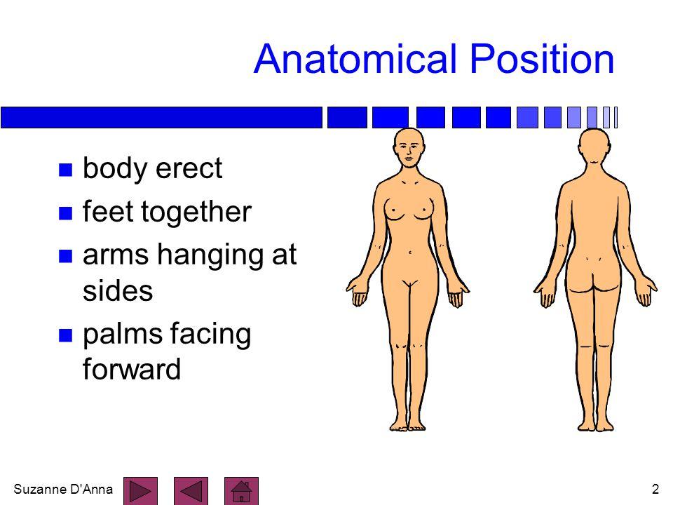 Suzanne D Anna3 Directional Terms n superior n inferior n anterior n posterior n medial n lateral n intermediate n proximal n ipsilateral n contralateral n distal n superficial n deep n parietal n visceral