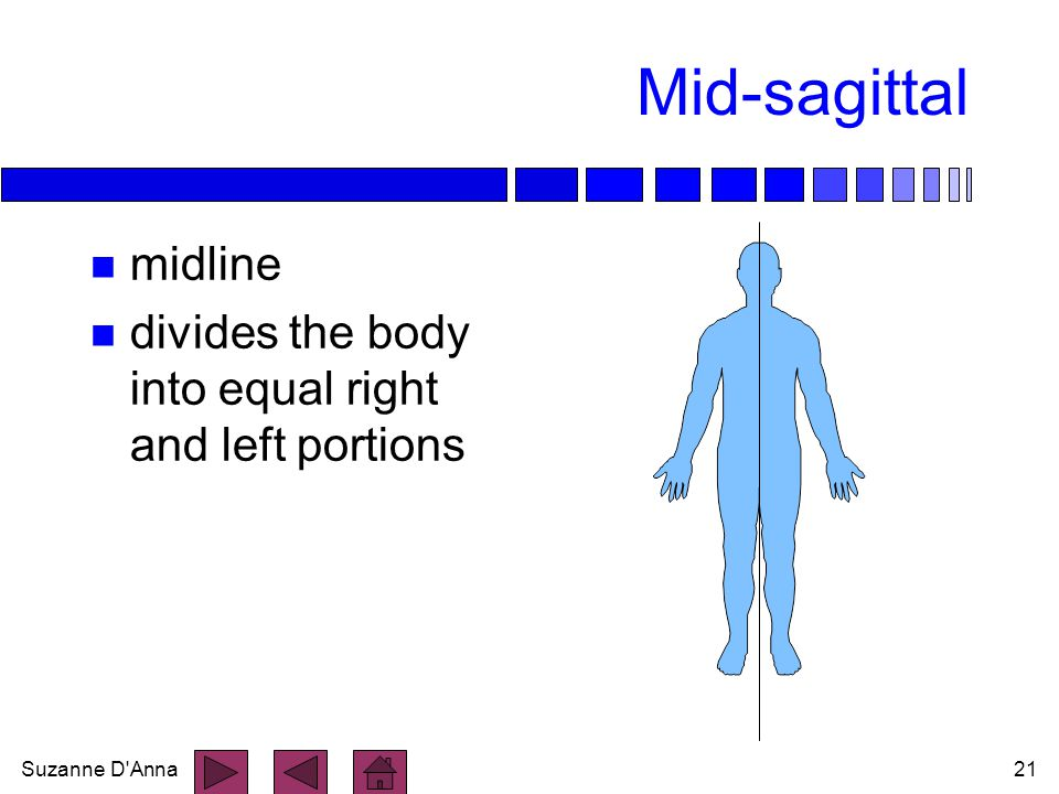 Suzanne D'Anna21 Mid-sagittal n midline n divides the body into equal right and left portions