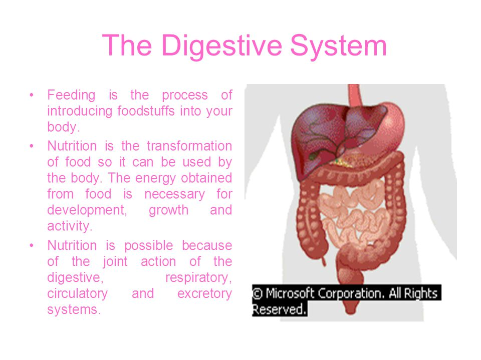 The Digestive System Feeding is the process of introducing foodstuffs into your body. Nutrition is the transformation of food so it can be used by the