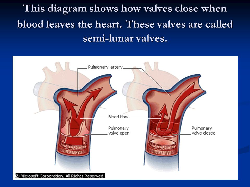 This diagram shows how valves close when blood leaves the heart. These valves are called semi-lunar valves.