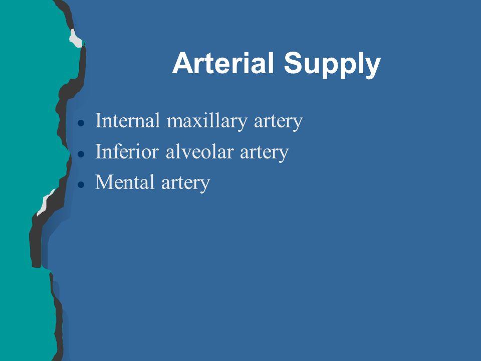 Arterial Supply l Internal maxillary artery l Inferior alveolar artery l Mental artery