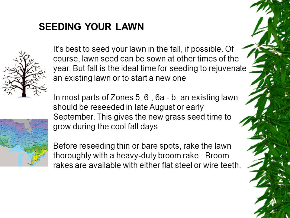 SEEDING YOUR LAWN It s best to seed your lawn in the fall, if possible.