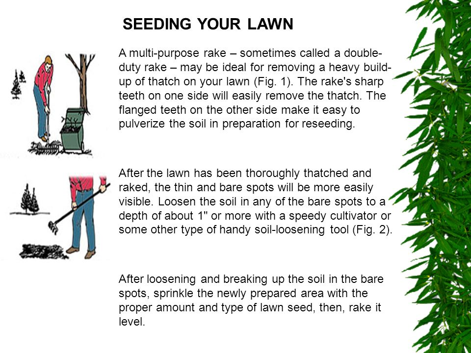 If the bare spots have been compacted by heavy traffic, loosen the soil to a depth of about 6 .