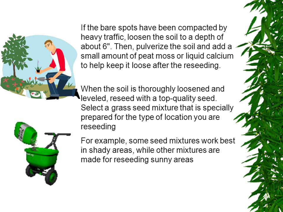 Reseed the bare spots by hand (Fig.3).