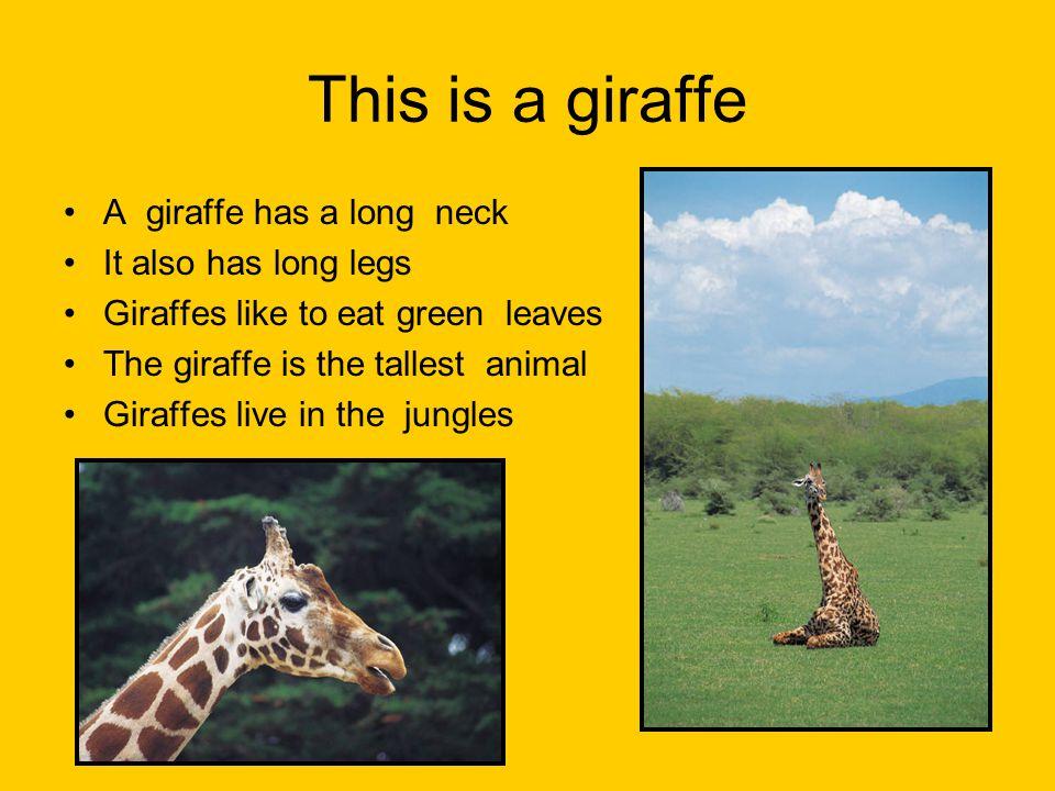 This is a giraffe A giraffe has a long neck It also has long legs Giraffes like to eat green leaves The giraffe is the tallest animal Giraffes live in